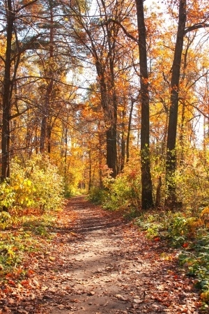 Devotional Diary:  Fall.  Along The Path…