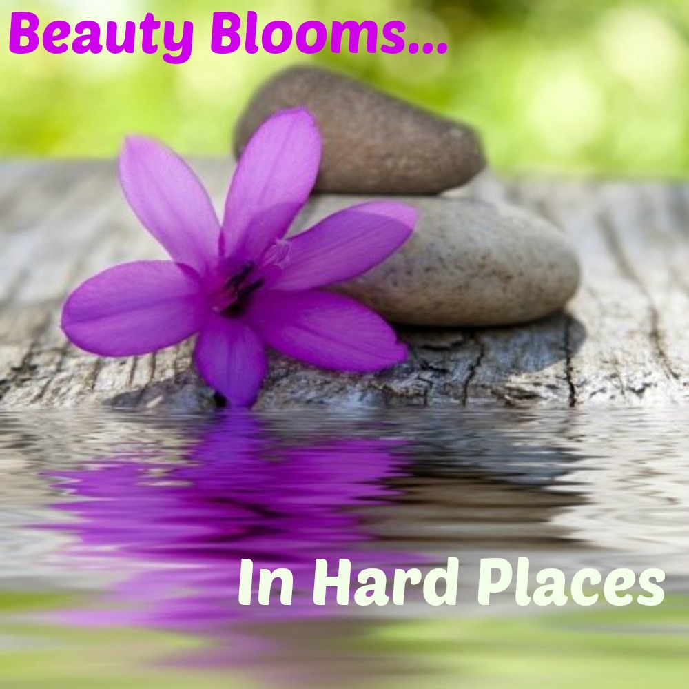 Beauty Blooms in Hard Places